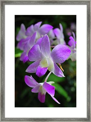 Delicately Purple Framed Print by Amanda Vouglas