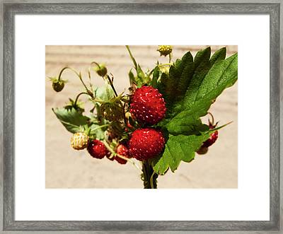 Delicious Wild Strawberry Framed Print