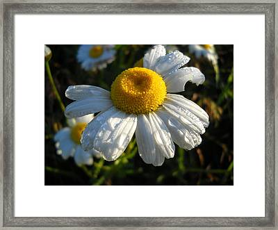 Delightful Dew Drops Framed Print