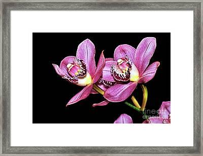 Delightful Orchid Framed Print