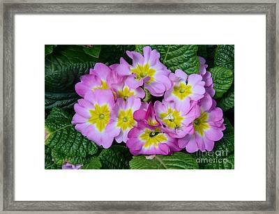 Delightful Spring Framed Print by Kathleen Struckle