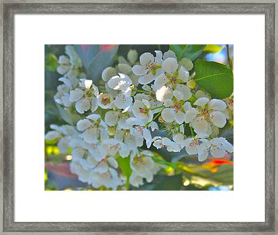 Delightfully White Framed Print by Gwyn Newcombe