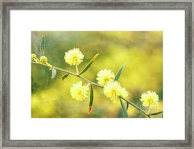 Delights Of An Aussie Spring Framed Print