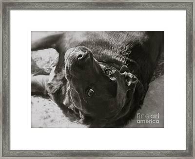 Delilah Bw Framed Print by Paula Deutz