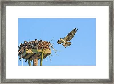 Delivering Breakfast Framed Print