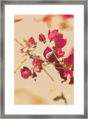 Delonix Regia Fine Art Framed Print by Jorgo Photography - Wall Art Gallery