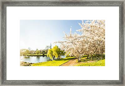Deloraine Cherry Tree Panorama Framed Print
