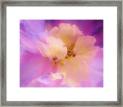 Delphinium Abstract Framed Print