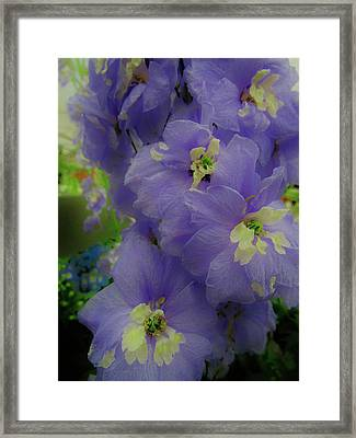 Delphinium Blues Framed Print