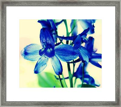 Delphinium Framed Print by Cathie Tyler