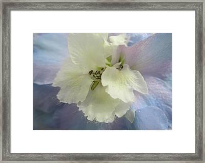 Delphinium Macro Framed Print