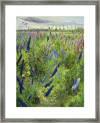 Delphiniums And Emerging Sun Framed Print