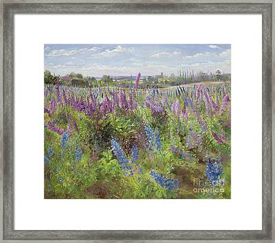 Delphiniums And Poppies Framed Print