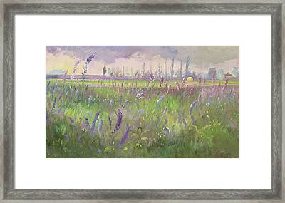 Delphiniums, Storm Passing Framed Print