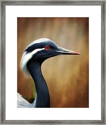 Demoiselle Crane Framed Print