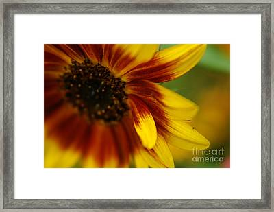 Demure Framed Print by Michelle Hastings