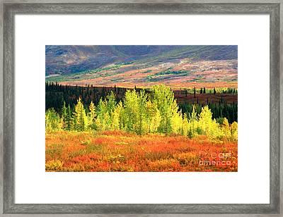 Denali Autumn Tundra Framed Print