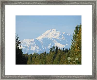 Denali Framed By Trees Framed Print