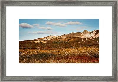 Denali National Park Framed Print