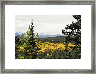 Denali National Park Landscape Framed Print
