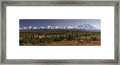 Denali Tundra Framed Print by Ed Boudreau
