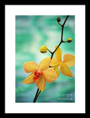Orchid Framed Prints