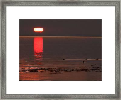 Denmark Summer Framed Print by Colette V Hera  Guggenheim