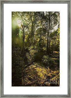 Dense Green Tropical Forest Framed Print