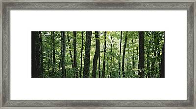 Dense Temperate Rain Forest Framed Print