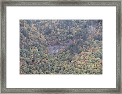 Dense Woods Framed Print