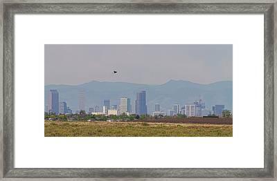 Denver Colorado Pretty Bird Fly By Framed Print by James BO Insogna