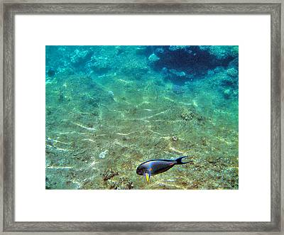 Depth. The Yellow Fin. Framed Print by Andy Za