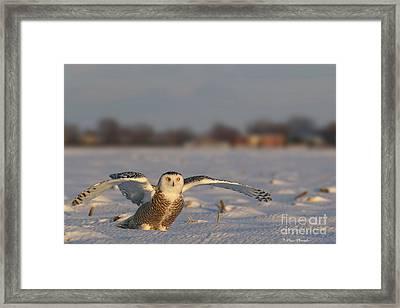 Des Ailes D'ange. Framed Print