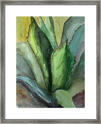 Desert Agave Framed Print by Marilyn Barton