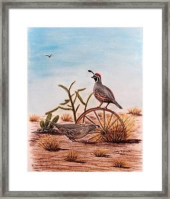 Desert Art Gambels Quail Framed Print