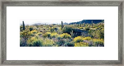Desert Az Framed Print by Panoramic Images