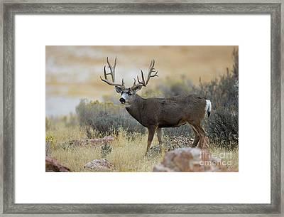 Desert Beast Framed Print