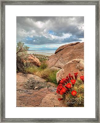 Framed Print featuring the photograph Desert Bloom by Spencer Baugh