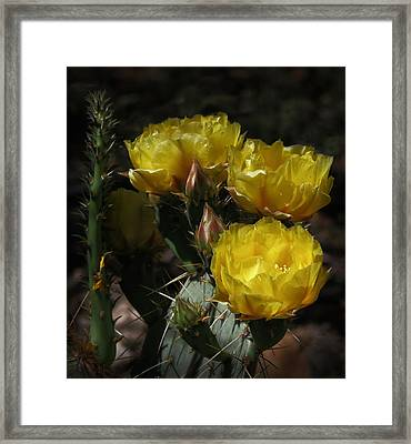 Desert Blooming Framed Print