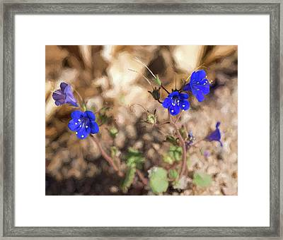 Desert Blue Bells At Joshua Tree National Park Framed Print by Penny Lisowski