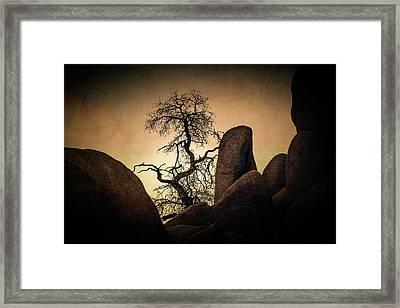 Desert Bonsai II Framed Print