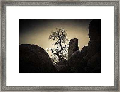 Desert Bonsai Framed Print