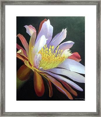 Desert Cactus Flower Framed Print