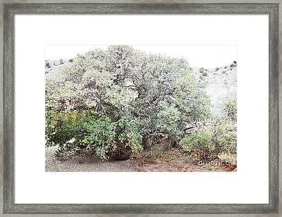 Framed Print featuring the photograph Desert Canyon Tree by Andrea Hazel Ihlefeld