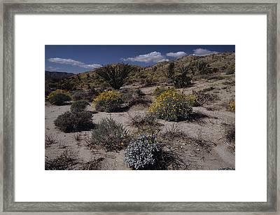 Desert Canyon Wildflower Bloom Framed Print