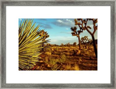 Desert Fan Framed Print