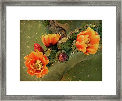 Framed Print featuring the photograph Desert Flame by Lucinda Walter