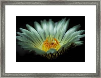 Desert Flower Framed Print by Elena E Giorgi
