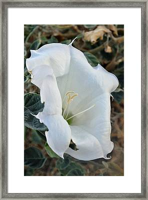 Desert Flower Framed Print by Gene Sherrill