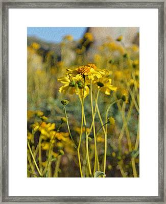 Desert Flower Impressions One - Wild Sunflowers Framed Print